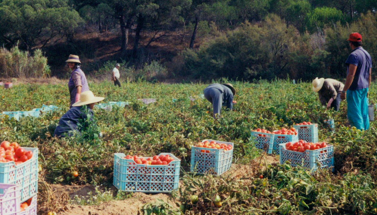 A Race Against The Clock Meeting Seasonal Labor Needs In The Age Of Covid 19 Migrationpolicy Org