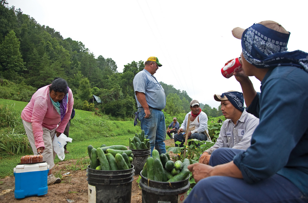 Agricultural workers break for lunch on a cucumber farm in Virginia.