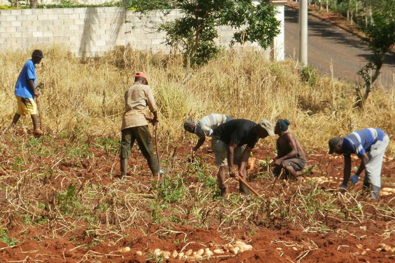 Jamaican deportees farming