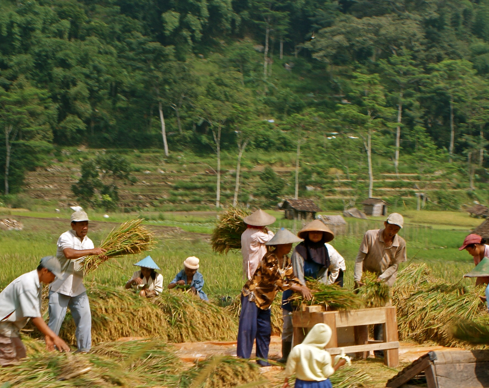 Agricultural workers in Indonesia