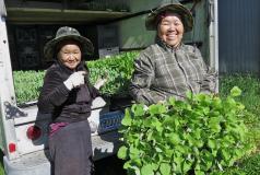 Hmong farmers in Minnesota