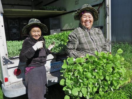 Hmong farmers in Minnesota