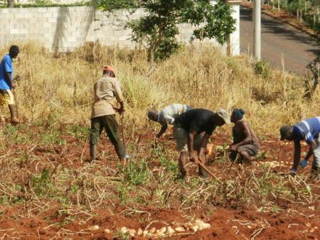 Jamaican deportees farming