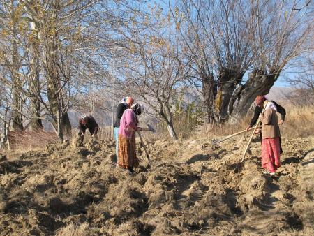 Tajik women working in a field